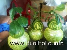 buoi-ho-lo-tai-loc-tet-2014